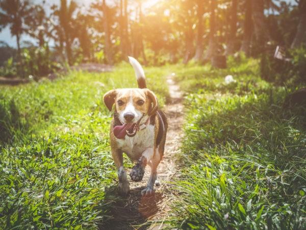 Hund och sommar